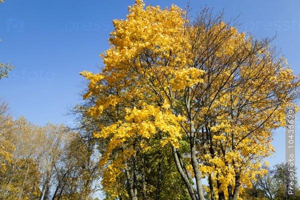 autumn season . foliage