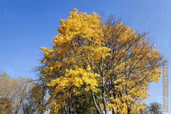 autumn forest . Belarus