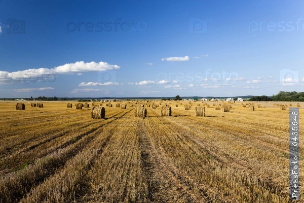 harvesting cereals.  Agriculture