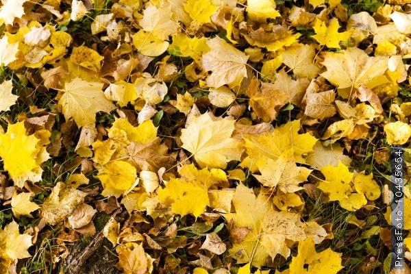 yellowed foliage .  close-up