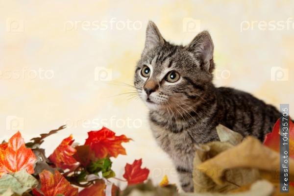 Tabby kitten peeking from the leaves