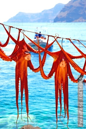 octopus   drying  in the  light