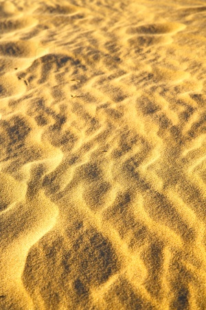 brown dry sand in  desert   africa erosion and abstract