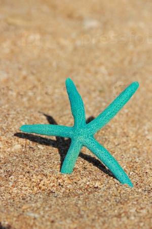 Голубая звезда на берегу песчаного пляжа