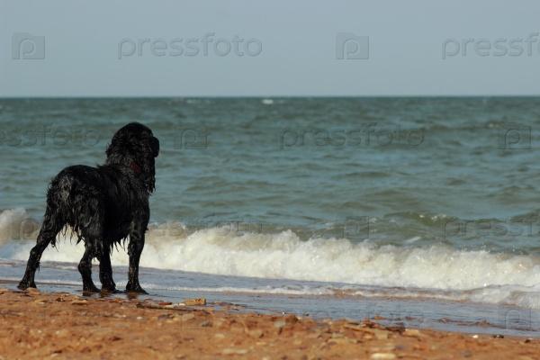 Собака терьер на берегу моря
