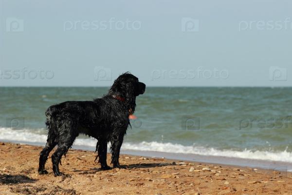 Терьер на берегу моря