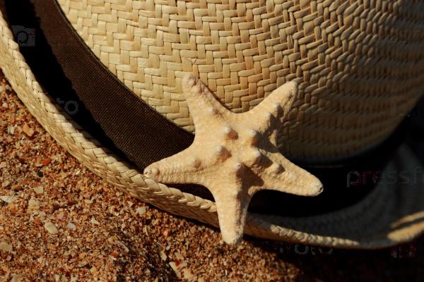 Морская звезда на берегу песчаного пляжа