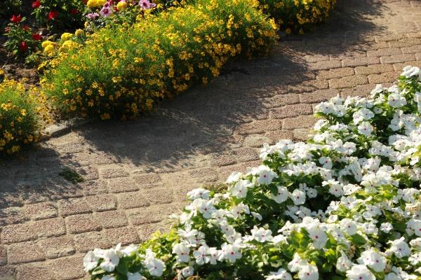 Пышный сад и цветник