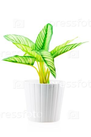 Цветок с зелеными листьями
