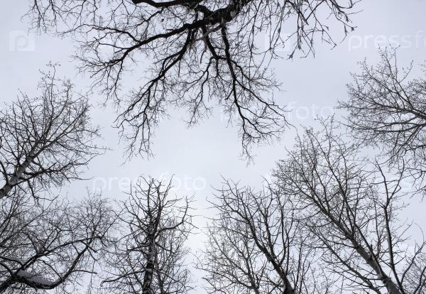 Небо в зимнем лесу