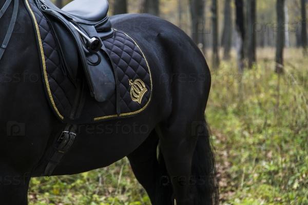 Седло на спине лошади