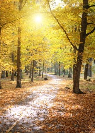 Осенний парк и опавшие листья