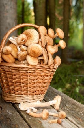 Корзина с грибами