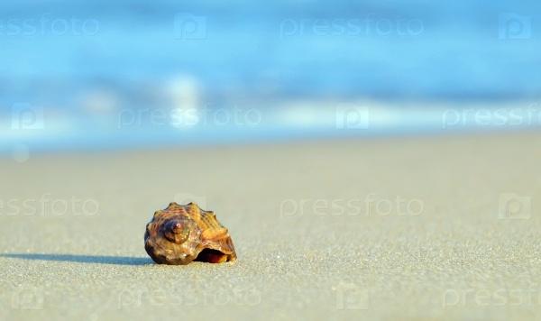Ракушка на берегу моря