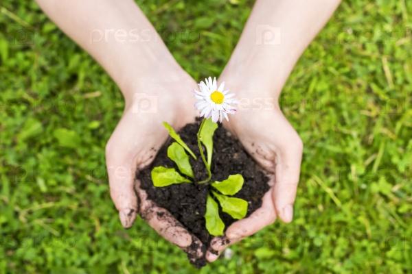 Живой цветок в заботливых руках