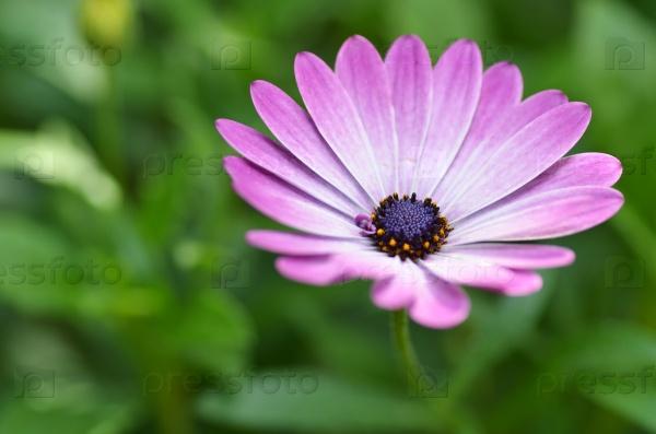 Прекрасный фиолетовый цветок