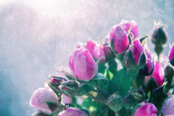 Букет из роз под дождем