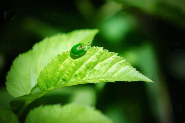 Маленький зеленый жук