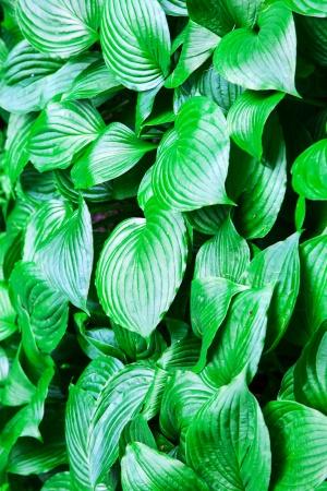 Большие зеленые листья