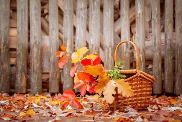 Корзина с осенними листьями