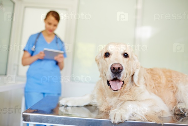 Домашнее животное в ветеринарной клинике