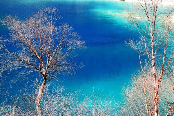 Деревья на фоне воды