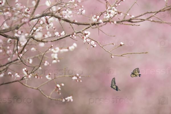 Бабочки в полете