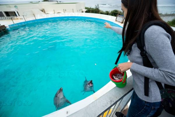 Девушка кормит дельфинов