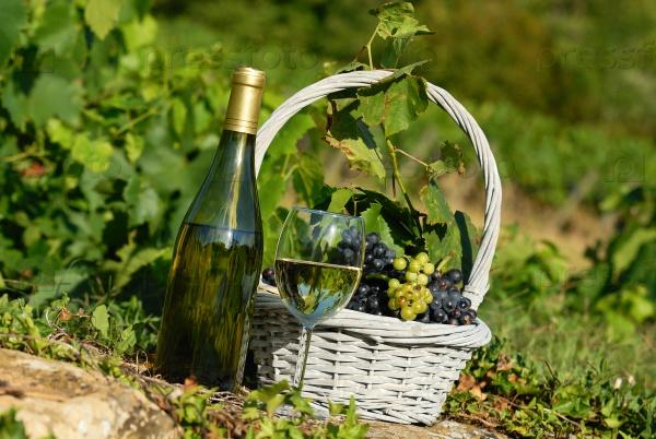 Урожай и вино