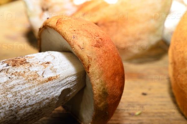 Дикие грибы