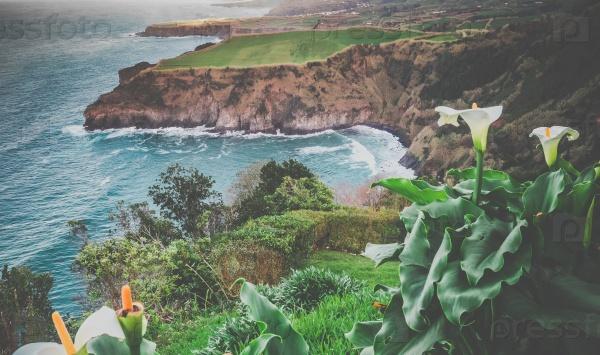Цветы на побережье Сан-Мигель
