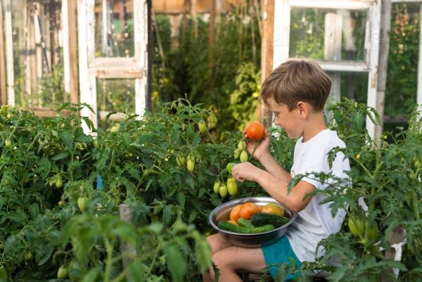 Мальчик собирает урожай овощей