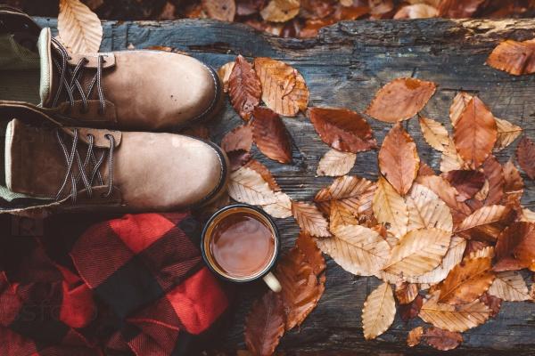 Осенние выходные в лесу