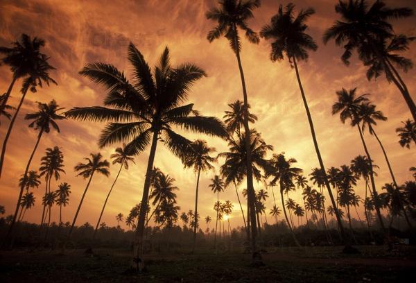 Пальмы на пляже на закате