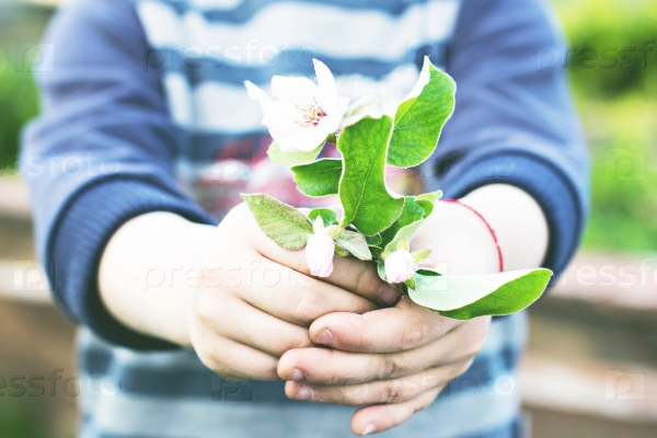 Цвет яблони в руках ребенка