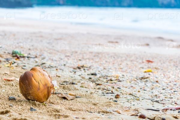 Кокосовый орех на песчаном пляже моря