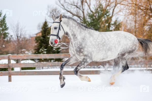 Лошадь с красивым цветом зимой
