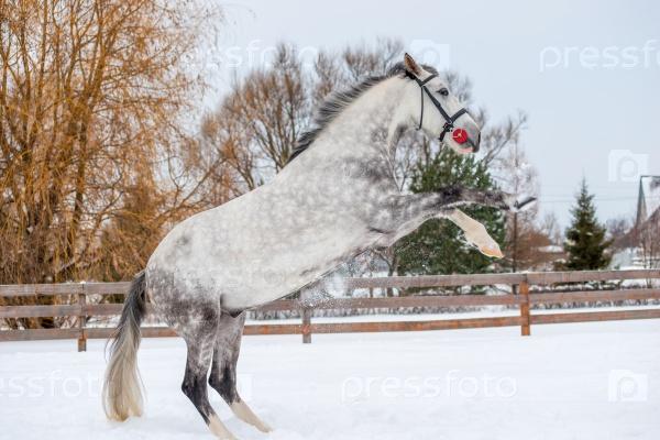Серая пятнистая лошадь