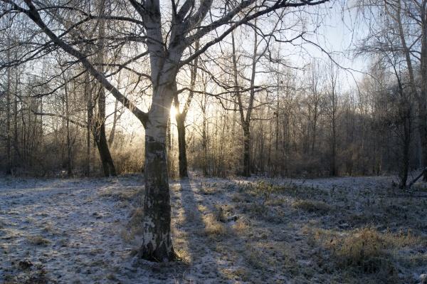 Ранняя осень в Архангельске