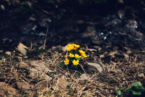 Желтые цветы на земле