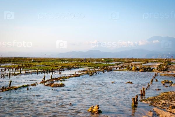 Водоросли на ферме в Индонезии