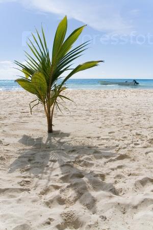 Экзотическое растение на пляже