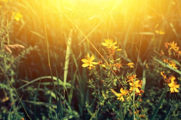 Весеннее поле с дикими цветами на рассвете