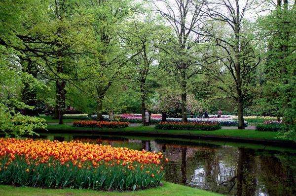 Сад тюльпанов