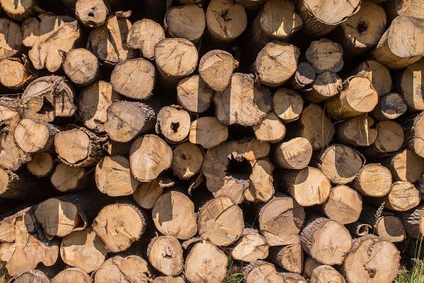 Куча старых дров для фона