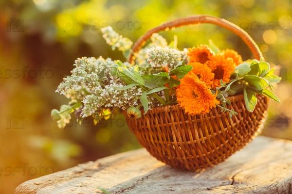 Цветы в корзине в саду