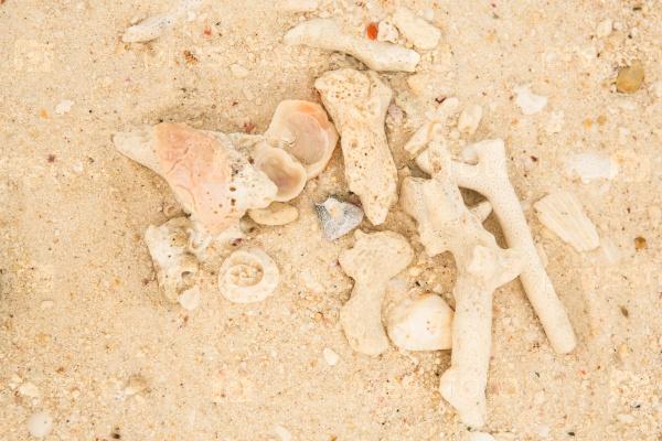 Кораллы и морские раковины на песке
