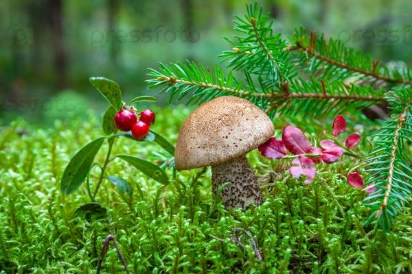 Маленький гриб в лесу