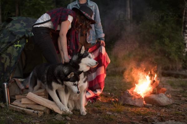 Собаки с хозяевами у костра
