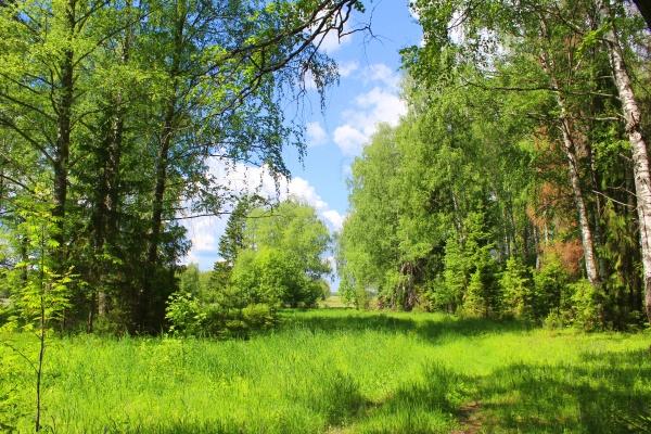 Красивое место в лесу